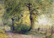 Dog Walking Painting Framed Prints - Under the Beeches Framed Print by John Steeple