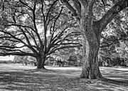Golf Holes Framed Prints - Under The Oaks Framed Print by Phill  Doherty