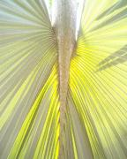 Florida Flowers Posters - Under the Palm I GP Poster by Chris Andruskiewicz