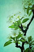 Pear Digital Art Posters - Under The Pear Tree Poster by Iris Lehnhardt
