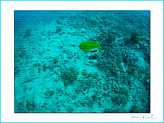 Under The Ocean Prints - Under The Sea  A Print by Debra     Vatalaro