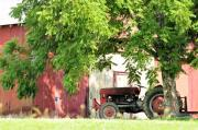 Red Tractors Posters - Under The Walnut Tree Poster by Jan Amiss Photography