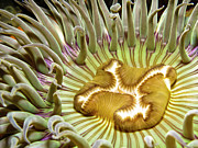 Anemone Posters - Under Water Anemone Poster by Lucidio Studio, Inc.