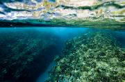 Coral Reefs Prints - Underwater Coral Reef Views In Shallow Print by Tim Laman