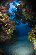 Crevice Prints - Underwater Crevice Through A Coral Print by Todd Winner