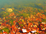 Indiana Autumn Posters - Underwater Fall Color Poster by Laura Newman