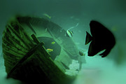 Sunken Boat Prints - Underwater Haven Print by Douglas Barnard