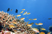 Fishes Photos - Underwater landscape by MotHaiBaPhoto Prints