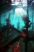 Wood Pylons Photos - Underwater Scenery by Georgette Douwma