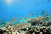 Fishes Photos - Underwater world by MotHaiBaPhoto Prints