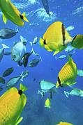 Unicorn Fish Print by Chris Stankis