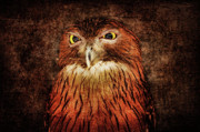 Owl Metal Prints - Unimpressed Metal Print by Andrew Paranavitana