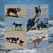 Dog Play Beach Framed Prints - Uninhibited Creatures Framed Print by Gwyn Newcombe