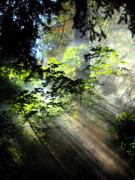 Faa Exclusive Prints - Union Creek sun rays Print by Shasta Eone