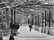 Lafayette Prints - University Walk Print by Coby Cooper