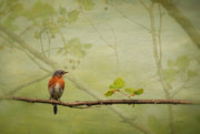 Bluebirds Prints - Until Spring Print by Lois Bryan