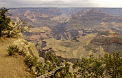 South Kaibab Trail Prints - Untitled Print by David Edwards