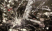 Diane Clement - Untitled Feathers