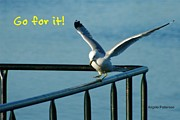 Inspirational Saying Photos - Untitled gull go for it by Angela Patterson