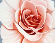 Orange Rose Prints - Untitled Print by Loraine LeBlanc