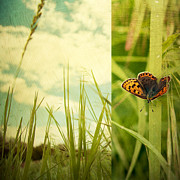 Butterfly Photo Posters - Unveil Poster by Violet Damyan