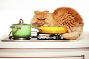 Unwanted Cat Behaviour Print by Hulya Ozkok