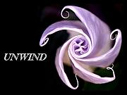 Release Originals - Unwind by Sindi June Short