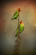 Peach-faced Lovebird Prints - Up and Away We Go Print by Saija  Lehtonen
