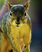 Critter Photos - Up Close and Personal by Lana Trussell