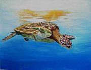 Turtle Pastels Acrylic Prints - Up for some rays Acrylic Print by Ceci Watson