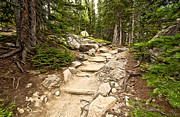 Colorado Landscape Photography Posters - Up The Pathway Poster by James Steele