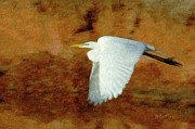 Egret Digital Art Posters - Up Up and Away Poster by Betty LaRue