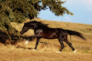 Forelock Photos - Uphilll Gallop D7090 by Wes and Dotty Weber
