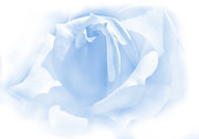 Blue Florals Prints - Upon a Cloud Blue Rose Flower Print by Jennie Marie Schell