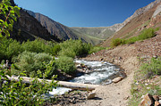 Crowley Lake Art - Upper McGee Creek by Kirk Williams