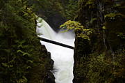 Upper Qualicum Falls Print by Bob Christopher