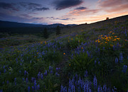Meadow Flowers Originals - Upper Wenas Sunset by Mike  Dawson