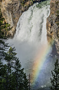 The Grand Canyon Of The Yellowstone Prints - Upper Yellowstone Falls and Rainbow Print by Greg Nyquist