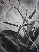 Estephy Sabin Figueroa Drawings - Upside-down Orchid by Estephy Sabin Figueroa