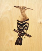 Wildlife Pyrography - Upupa by Ilaria Andreucci