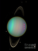 Desdemona Posters - Uranus With Moons Poster by Nasa
