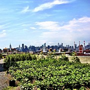 Skyline Framed Prints - Urban Nature - New York City Framed Print by Vivienne Gucwa