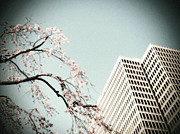 Sakura Photo Prints - Urban Spring Print by Eena Bo