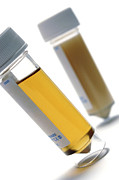 Urine Art - Urine Samples by Crown Copyrighthealth & Safety Laboratory