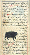 Signs Of The Zodiac Prints - Ursa Minor, 17th Century Print by Science Source