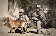 Working Dog Posters - U.s. Marines And A Military Working Dog Poster by Stocktrek Images
