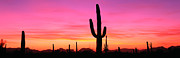 Finishing Posters - Usa, Arizona, Organ Pipe National Monument, Sunset Poster by Robert Glusic