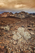 Y120907 Art - Usa, California, Death Valley, Barren Landscape by Bryan Mullennix