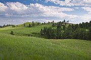 Custer State Park Prints - Usa, South Dakota, Meadow In Custer State Park Print by Tetra Images