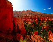 Bryce Canyon National Park Art - Utah - Navajo Loop by Terry Elniski